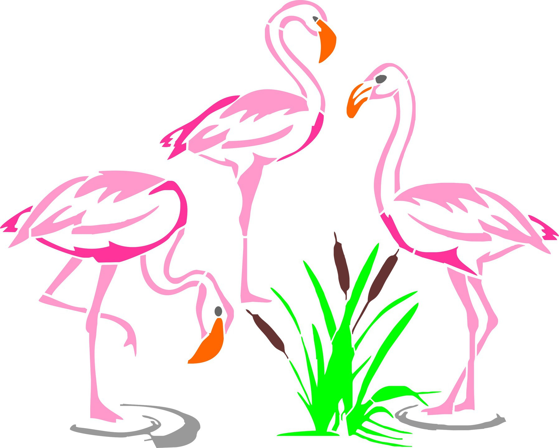 groupe flamants rose 1